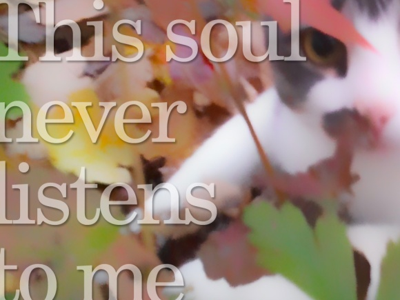 12-13-14_this-soul-never-listens-to-me